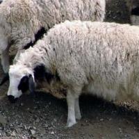 ovc20000.jpg