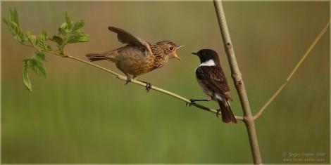 международная перепись птиц