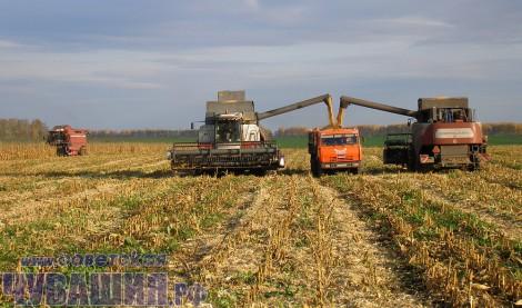 Интерес к кукурузе в последние годы стал возрождаться почти повсеместно: кукурузный силос – неоценимый компонент в рационе животных. <br> Фото А. Кириллова
