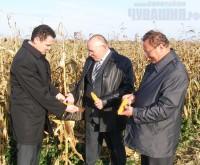 кукуруза в чувашии