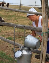 доярка молоко бидон