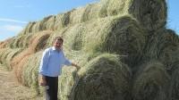 заготовка сена сенаж