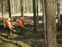 обработка лесных участков