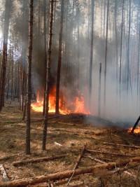 2010 год. Горят леса в Заволжье.Фото из архива редакции