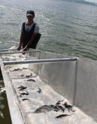 Всего в водоемы за последние годы выпущено 2,7 миллионов мальков ценных пород рыб.