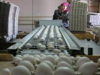 К 1 декабря валовой сбор яиц составит 90 млн. штук. Фото Леонида НИКИТИНА