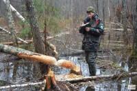 Осенью легче всего обнаружить места обитания бобров. (Численность бобров сокращается из-за маловодности).