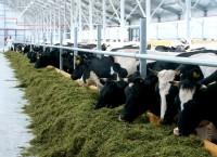 Собственные корма, коровы и молоко.