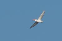 Валерия поймала в кадр более 1000 птиц Чувашии.