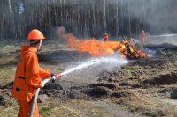 Брошенный окурок или непотушенный костер могут стать причиной лесного пожара.