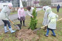 В первый день акции было посажено более 150 деревьев.