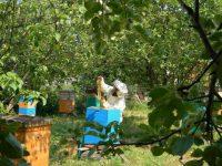 Село для Лилии Петровой из Чувашии – это сбор хмеля, ягод, меда...