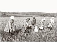 Дети войны работали в колхозах наравне со взрослыми.