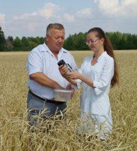 Хлебное поле – один из главных продовольственных ресурсов республики.
