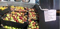 Всю партию санкционных яблок уничтожил трактор