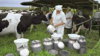 Пора «большого молока» еще не закончилась.