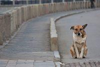 Сострадание к животным так тесно связано с добротой характера, что можно с уверенностью утверждать: кто жесток с животными, тот не может быть добрым человеком (Артур Шопенгауэр, философ).