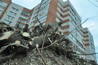 Каждый год на вырубку деревьев выписывается до тысячи ордеров.Фото Олега МАЛЬЦЕВА
