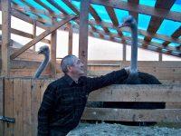Африканский страус по кличке Иван в большой дружбе с Егором Егоровым.Фото автора