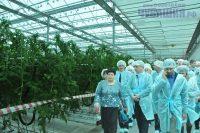 «Ольдеевская» уверенно идет в первых рядах овощеводов России.Фото Олега МАЛЬЦЕВА