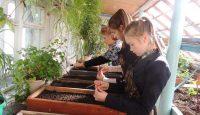 Благодаря стараниям юных экологов на клумбах города Шумерли запестрят георгины, циннии, тагетес, сальвии, цинерарии, петунии, агератум и другие растения.Фото cap.ru