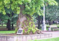 В Волгограде природный памятник стоит на площади Павших борцов рядом с Вечным огнем.
