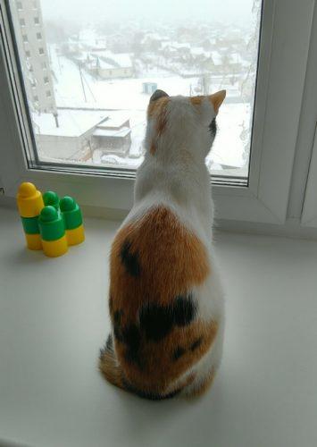 В окно смотрела кошка на снег и на метель,Ей захотелось снова в теплую постель...Фото Валерия Козлова
