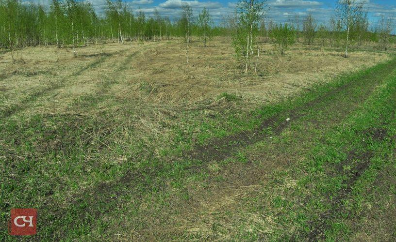 Скоро эти земли будут распаханы и засеяны злаками.Фото Олега Мальцева