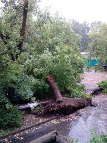 Шквалистый ветер был такой силы, что выдергивал деревья с корнями.Фото Вконтакте.com