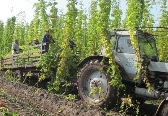 ВБашкирии собрано 3,76 млн тонн зерна