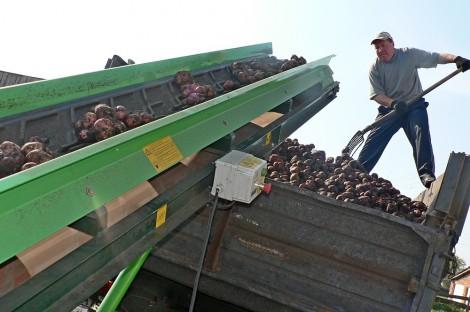 уборка урожай картофеля