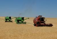 страда комбайны уборка урожай